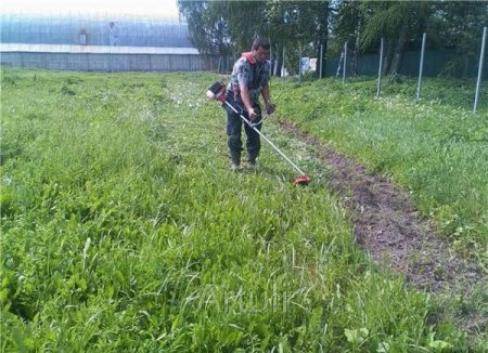 Чем косить траву на участке