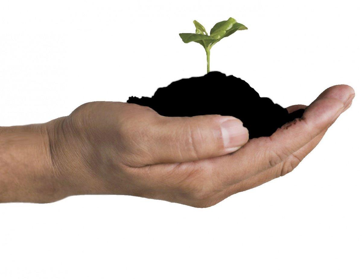 Азотное удобрение своими руками