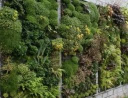 Вертикальное озеленение - необычное дизайнерское решение для оформления загородного участка