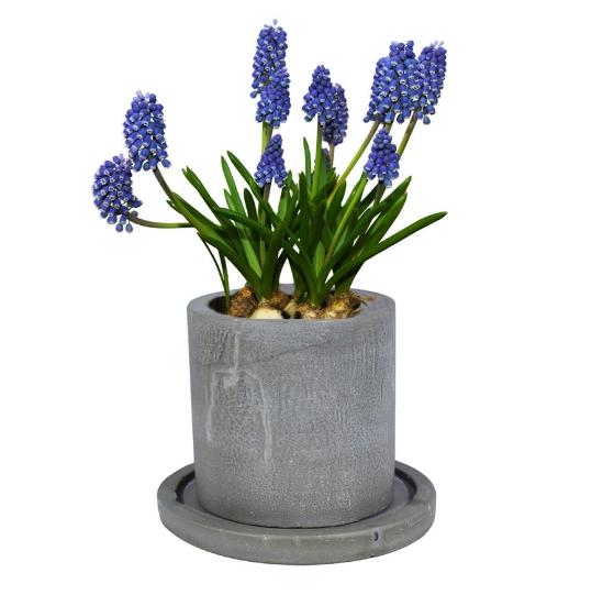 Бетонные кашпо для цветов